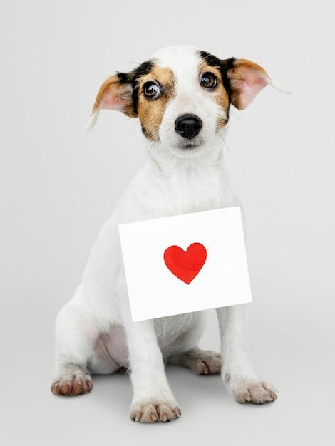 Adorable cachorro de jack russell retriever con una maqueta de carta de amor PSD gratuito
