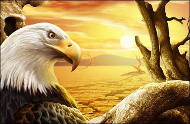 aguda mirada de águila en el sol del desierto psd Psd Gratis