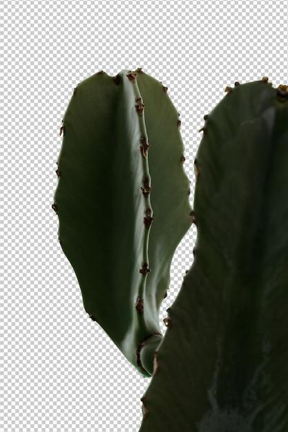 Cactus su sfondo bianco Psd Premium