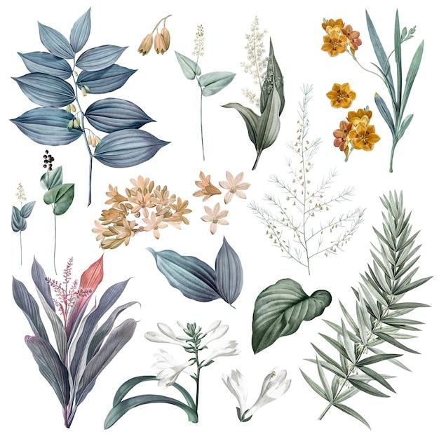 Conjunto de ilustraciones de flores y plantas. PSD gratuito
