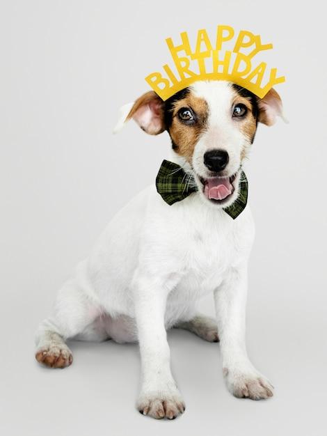 Cucciolo Adorabile Di Jack Russell Retriever Che Indossa Una Corona