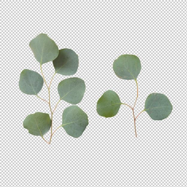 Eucalypthus bladeren geïsoleerd Premium Psd