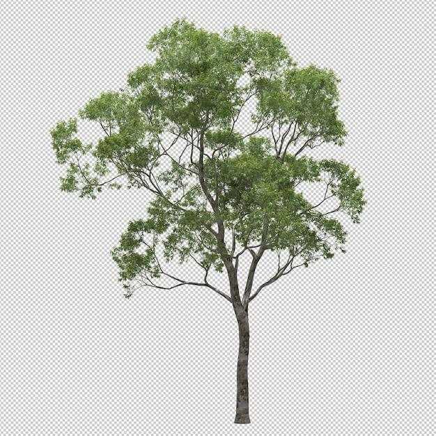 Eucalyptusboom Premium Psd