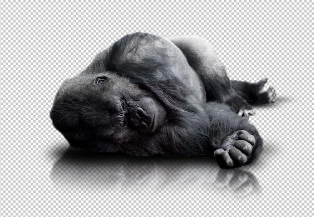Gorila realista PSD Premium