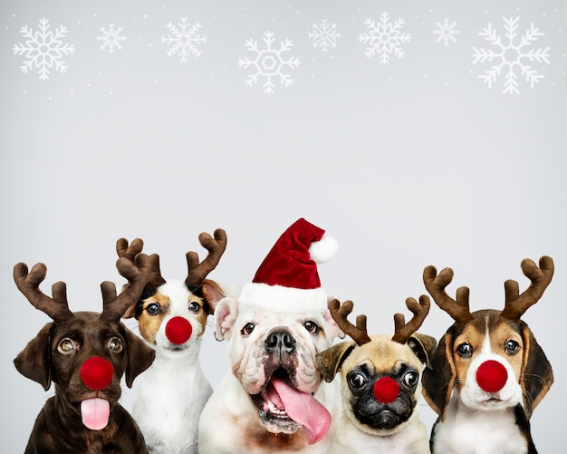 Groep puppy die kerstmiskostuums dragen om kerstmis te vieren Gratis Psd