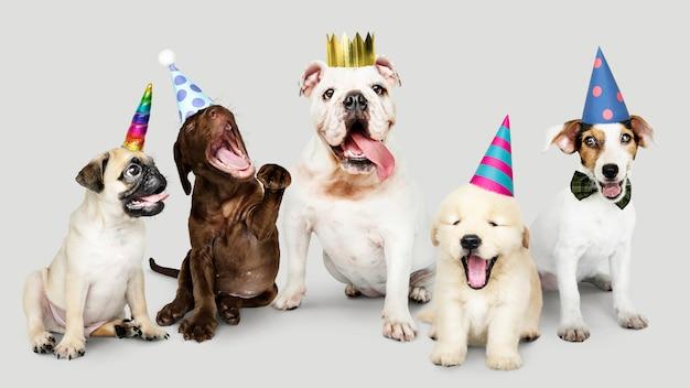 Gruppo di cuccioli che celebra insieme il nuovo anno Psd Gratuite