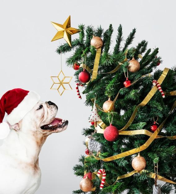 Leuk buldogpuppy die een hoed van de kerstman dragen terwijl het houden van een giftdoos Gratis Psd