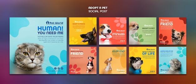 Pacchetto di post di instagram per l'adozione di animali domestici con animali Psd Gratuite