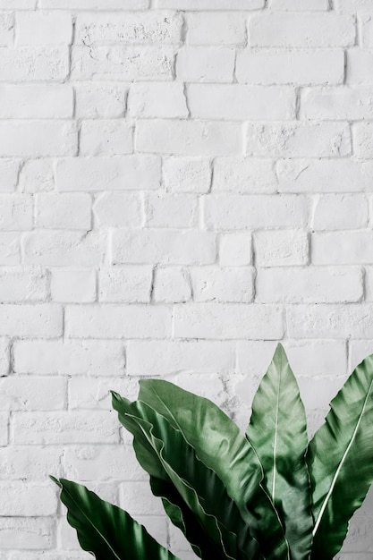 Philodendron xanadu hoja PSD gratuito