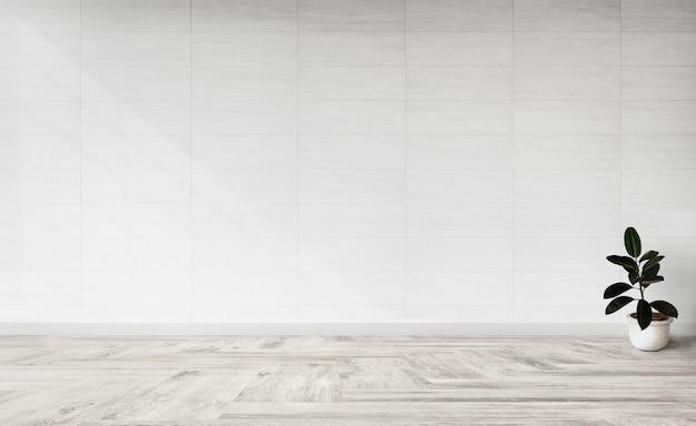 Planta de higo de goma en una habitación vacía. PSD gratuito
