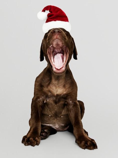 Portret van een leuk puppy van de labrador die een hoed van de kerstman draagt Gratis Psd