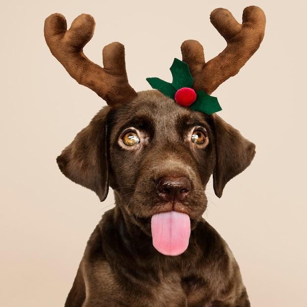 Portret van een schattig labrador puppy dragen van een kerst rendier hoofdband Gratis Psd