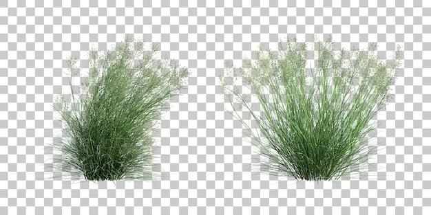 Rappresentazione 3d del ricegrass indiano Psd Premium