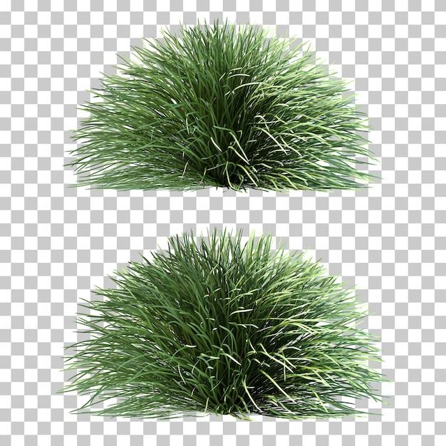 Rappresentazione 3d dell'erba di mondo Psd Premium