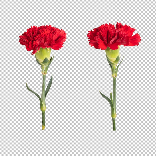 Red carnation transparantiemuur. floral object. Premium Psd