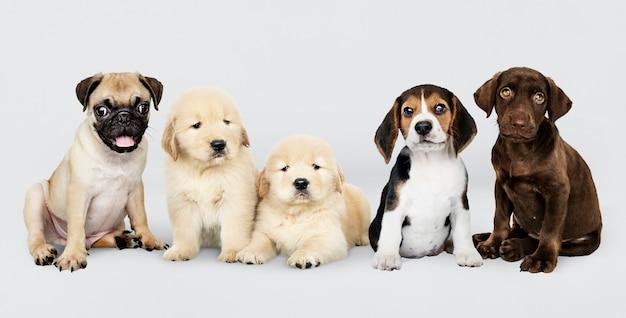 Retrato de grupo de cinco adorables cachorros. PSD gratuito