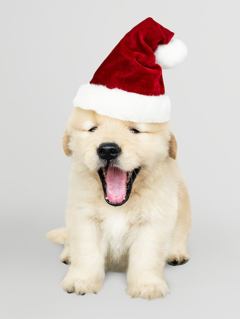 Retrato de un perrito lindo del golden retriever que lleva un sombrero de papá noel PSD gratuito