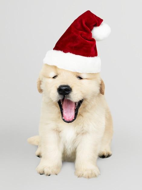 Ritratto di un simpatico cucciolo di golden retriever che indossa un cappello di babbo natale Psd Gratuite