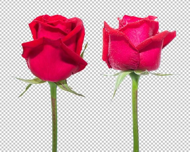 Rode roze bloemen op geïsoleerde transparantie. bloemen. Premium Psd