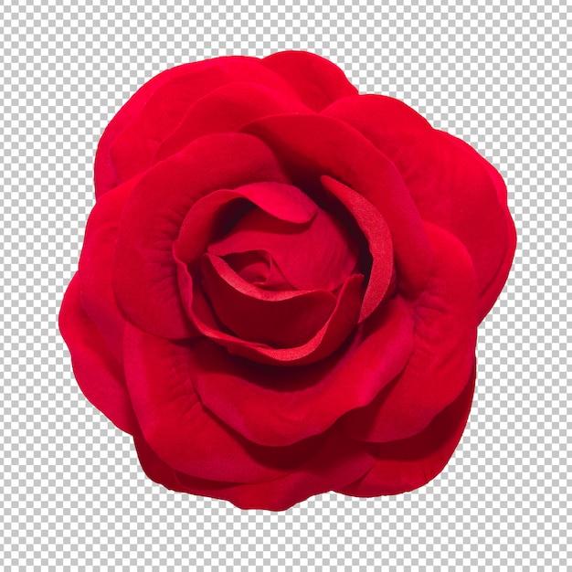 Rode roze bloemen op geïsoleerde transparantieachtergrond Premium Psd