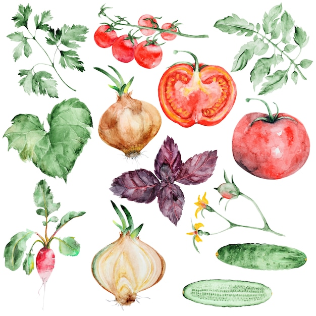 Set di verdure ad acquerello Psd Premium