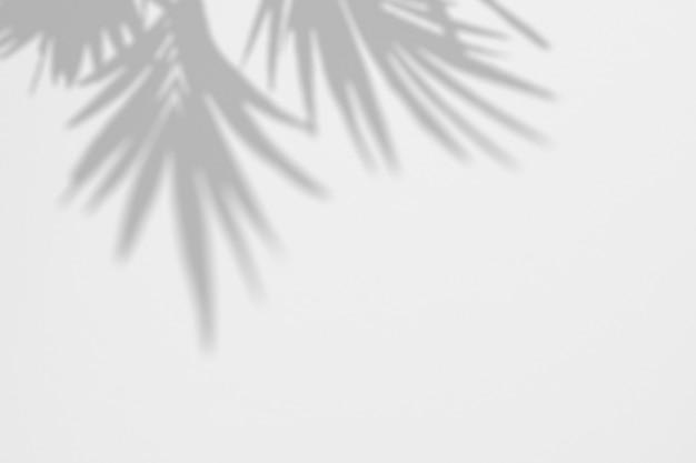 Sombras de hojas de palmera tropical en una pared blanca PSD Premium
