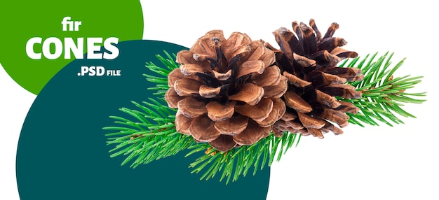 Tak van dennenboom met dennenappels Premium Psd
