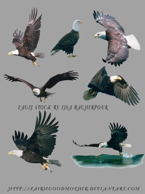 Vliegende adelaars psd Gratis Psd