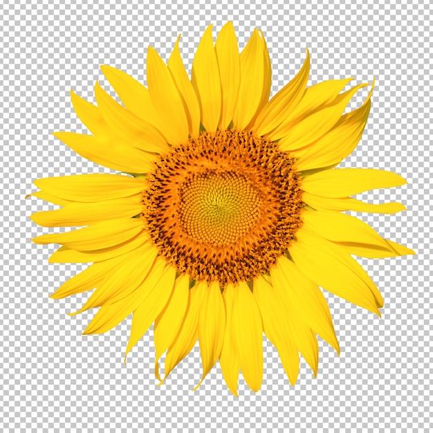 Zonnebloem bloem isoleated transparantie achtergrond Premium Psd