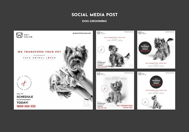 Collection De Publications Instagram Pour Une Entreprise De Toilettage Pour Animaux De Compagnie Psd gratuit