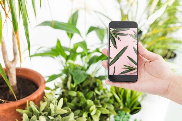 Concept de jardinage avec la main sur smartphone Psd gratuit