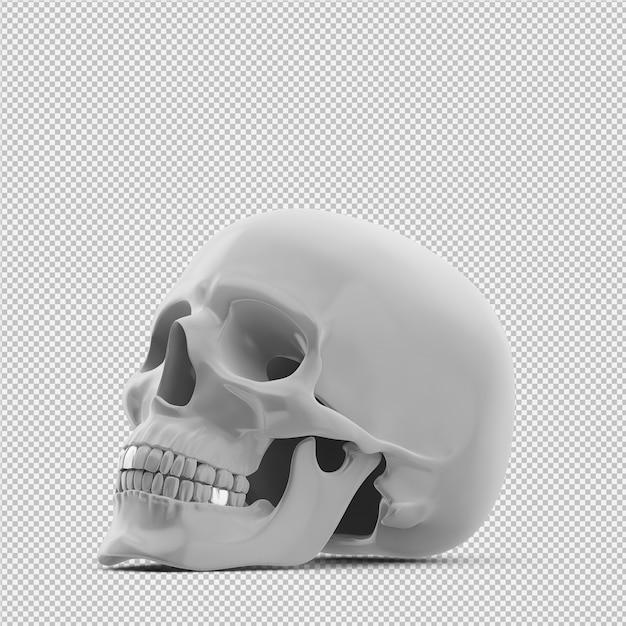 Crâne isométrique 3d rendu isolé PSD Premium