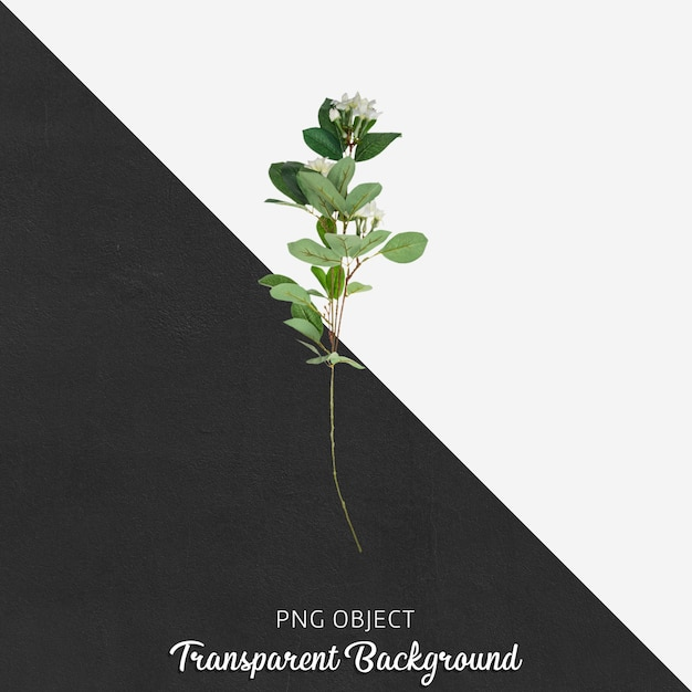 Fleur sur transparent PSD Premium
