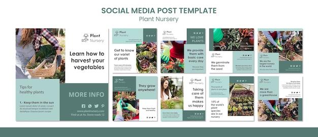 Modèle De Publication Sur Les Médias Sociaux De Pépinière De Plantes PSD Premium