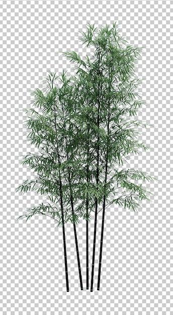Objet Nature Bambou Arbre Isolé Blanc PSD Premium