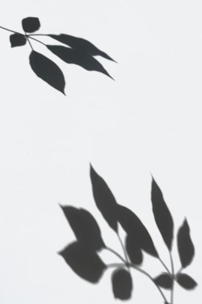 Ombre de feuilles sur un mur blanc Psd gratuit