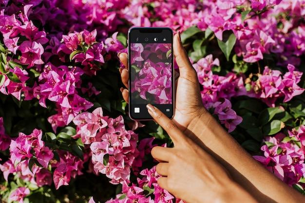 Photographie de fleurs Psd gratuit