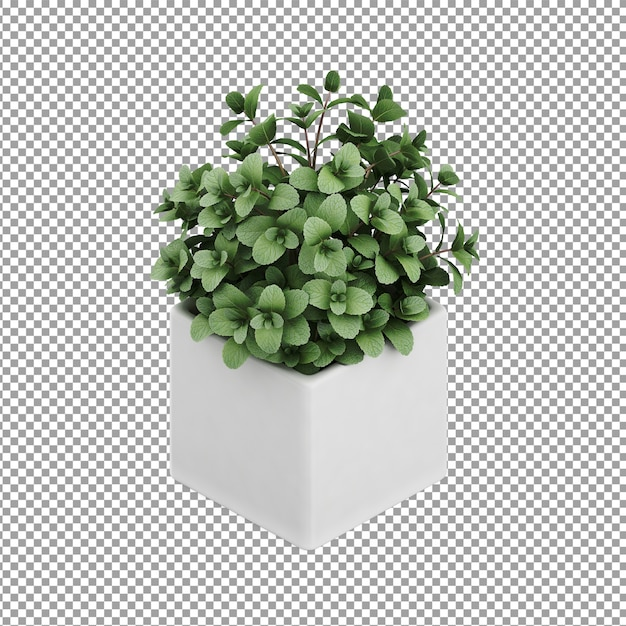 Plante isométrique PSD Premium
