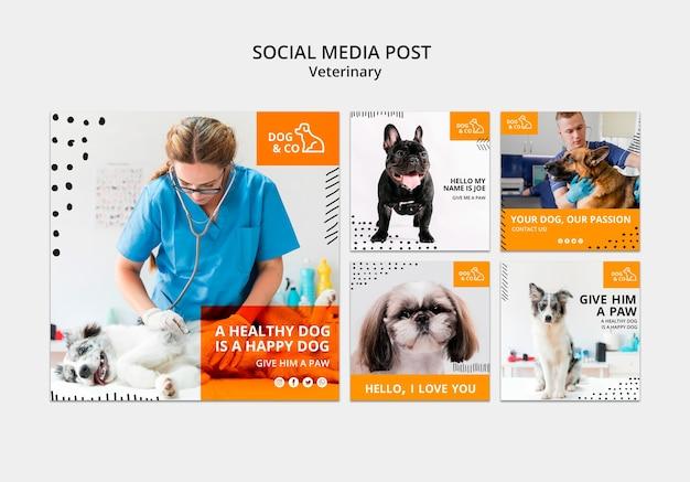 Publication Sur Les Réseaux Sociaux Avec Modèle Vétérinaire Psd gratuit