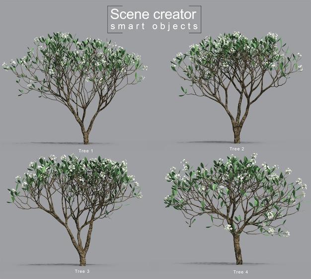 Rendu 3d Du Créateur De Scène D'arbre De Frangipanier PSD Premium