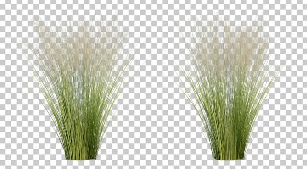 Rendu 3d D'herbe De Plumes Mexicaine PSD Premium
