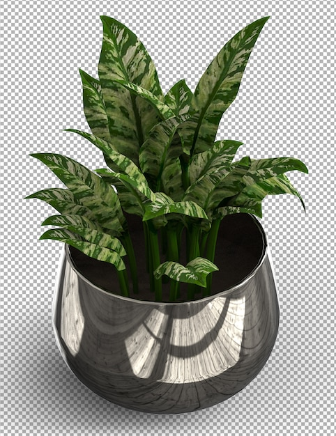 Rendu De Plante Isolée. Vue Isométrique Sur Transparent. PSD Premium