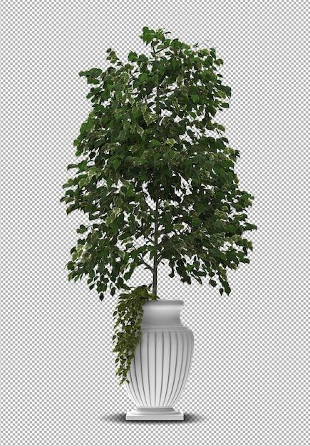 3d render da planta interior em vaso isolado Psd Premium
