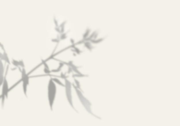 A sombra de uma planta exótica em uma parede branca. Psd Premium