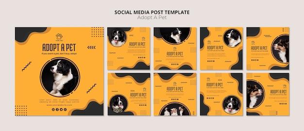 Adote um post de mídia social para cães border collie Psd grátis