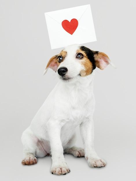 Cachorrinho adorável de jack russell retriever com um modelo de carta de amor Psd grátis