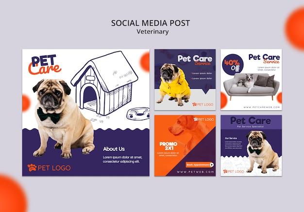 Coleção de post de mídia social para cuidados com animais de estimação Psd grátis