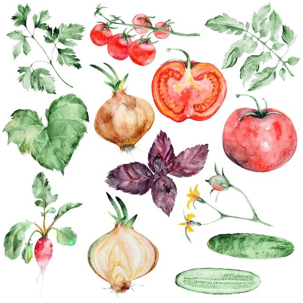 Conjunto de legumes em aquarela Psd Premium