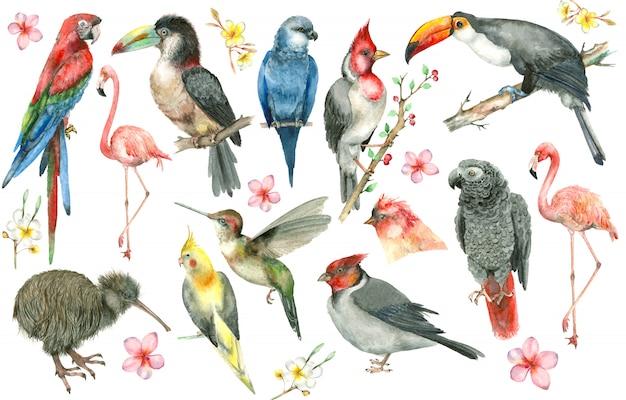 Conjunto de pássaros tropicais Psd Premium