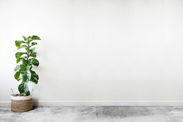 Fiddle leaf fig em um quarto Psd grátis